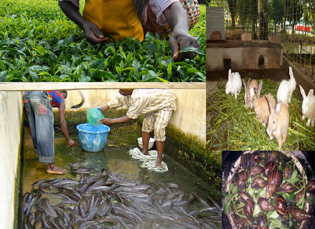 26 Best Low Capital Agriculture Farming Business Ideas How Africa News