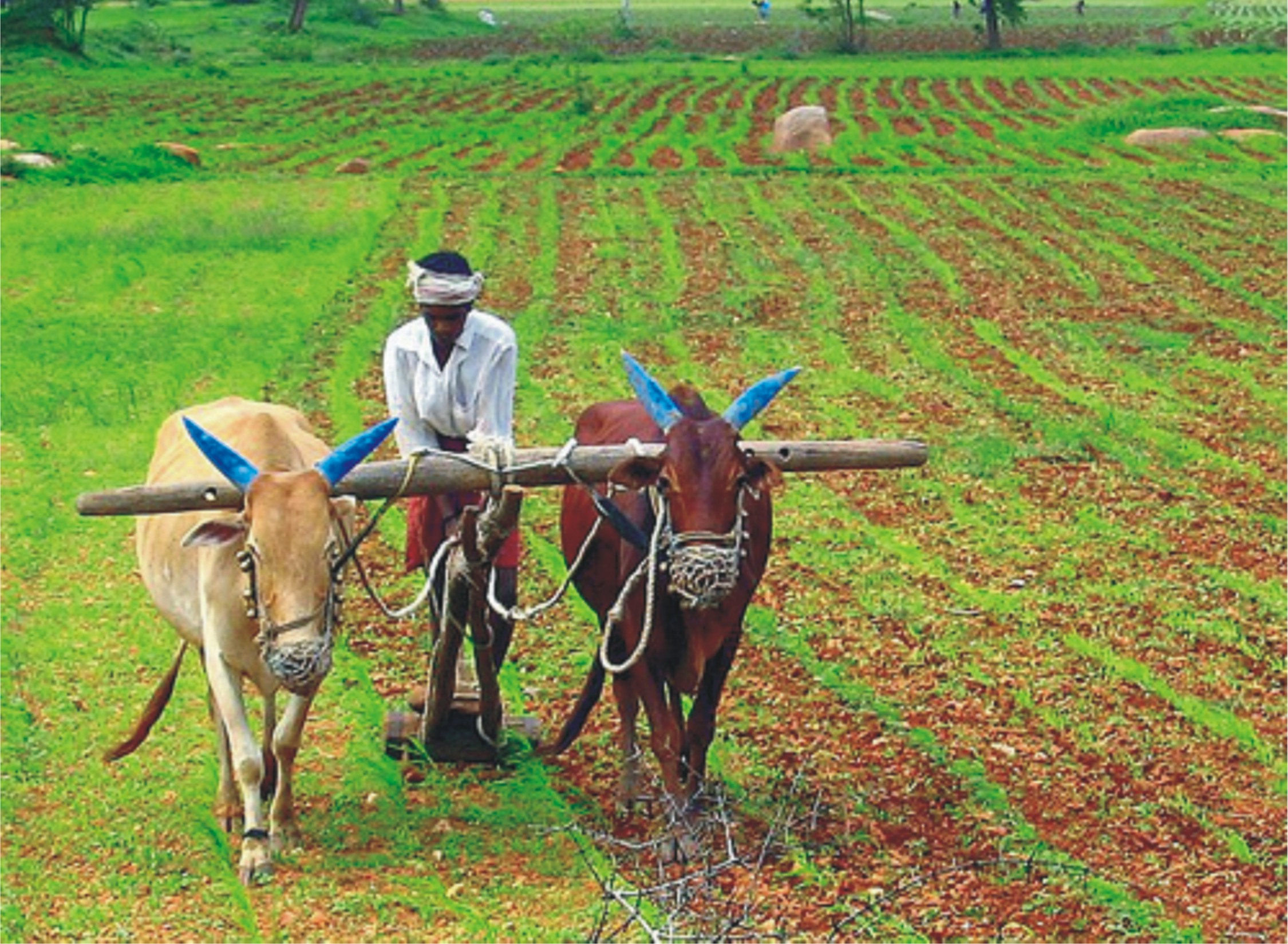 non farming activities in india essays