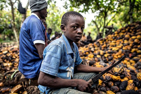 How Cocoa Farming In Nigeria Is An Opportunity For Investors |Coco Africa