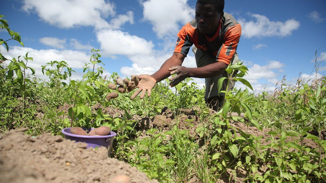 Climate proofing africa 39 s agriculture offers opportunities for African crops and slave cuisine