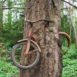 Bike In Tree Vashon Island, Bicycle Tree