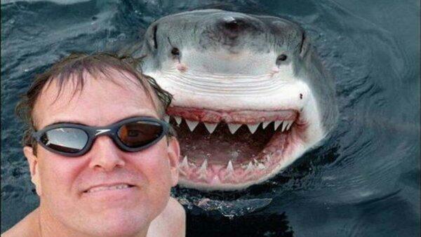 Sharks, Selfies, Killfies