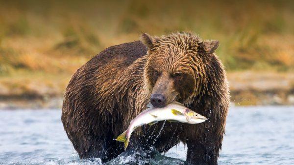 Bear – How Africa News