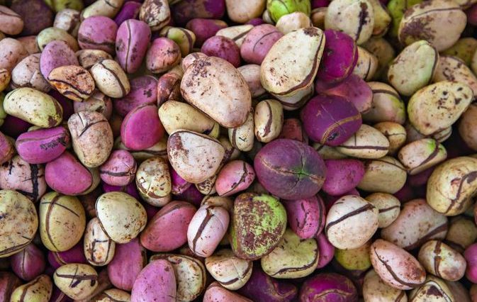 kola nuts The health benefits of kola nut align with those of coffee several possible benefits of the kola nut and its products include the following: boost to metabolism: kola nut products contain.