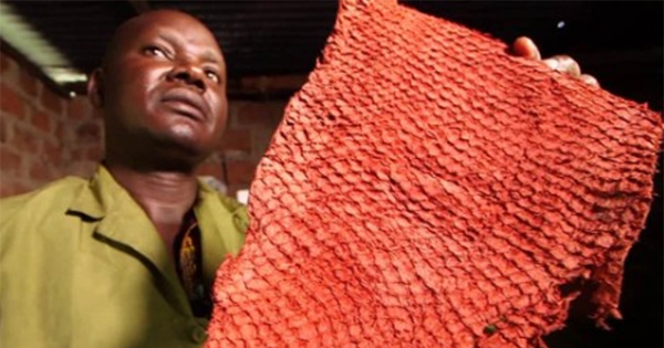 leather made of janitor fish skin