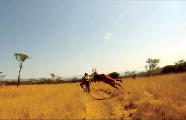 Watch: South African Mountain Biker Gets The Craziest Ride Of His Life After Being Hit By Huge Running Antelope