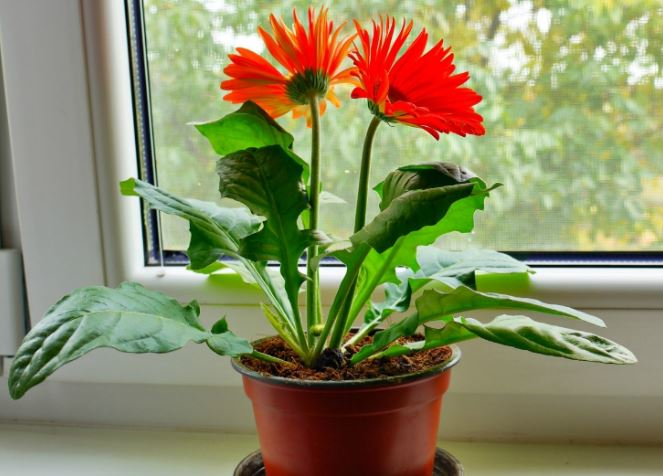 10 Easy To Grow Plants With Great Health Benefits